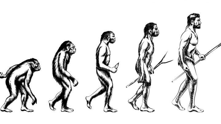 生命の進化の過程を逆に辿ると、どこに行き着くのかが分かる | 日出 ...